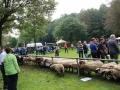 Ernte-und-Tierschaufest-2014-031