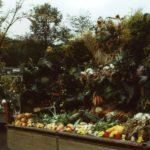 Erntewagen Ernte- und Tierschaufest Drolshagen